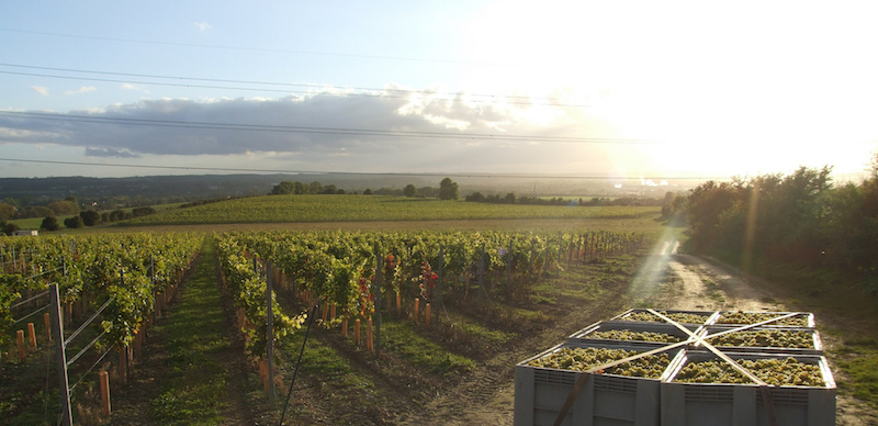 Raise a glass to fine Kent wines
