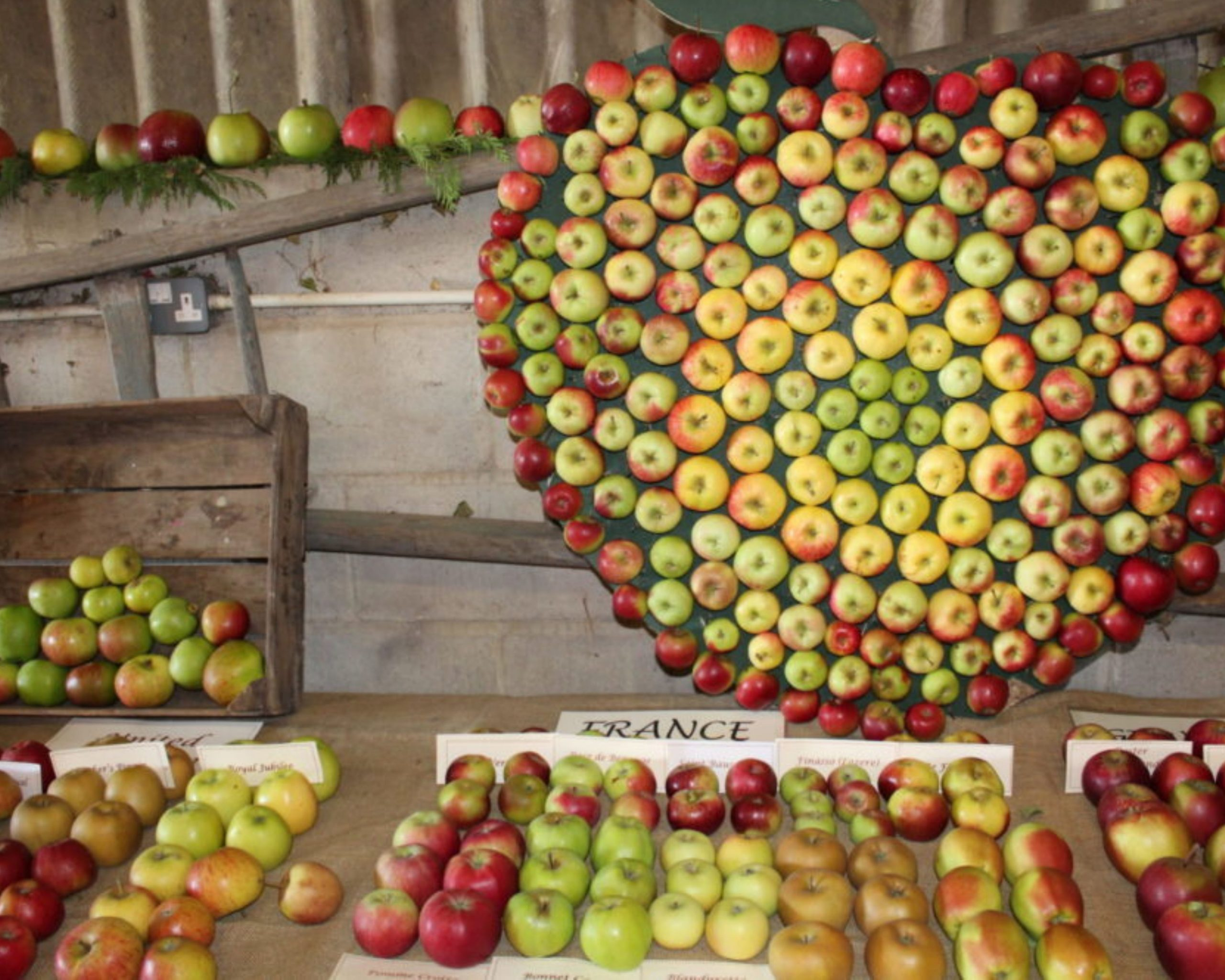 Lots of apples in a pretty shape