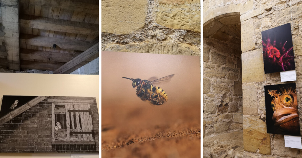A bee, barn owl and blenny - photos exhibited at Bodiam castle