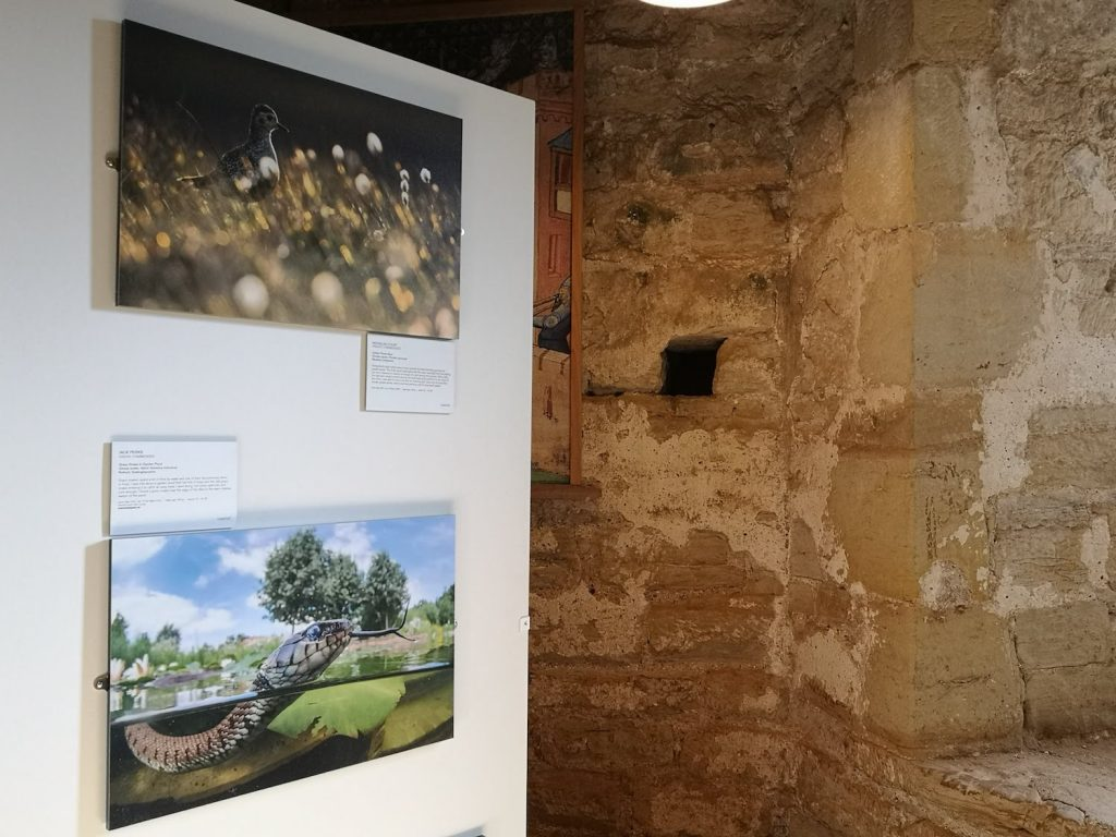 Photos of a plover and a snake exhibited at Bodium castle