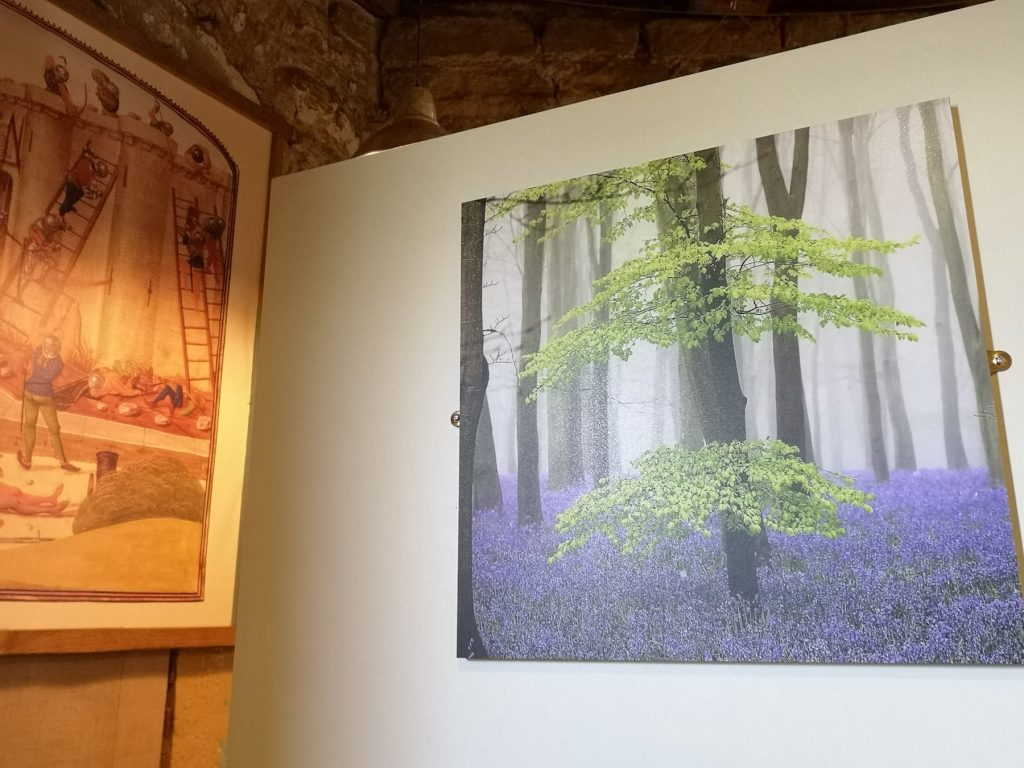 Photo of a bluebell wood displayed within Bodiam castle