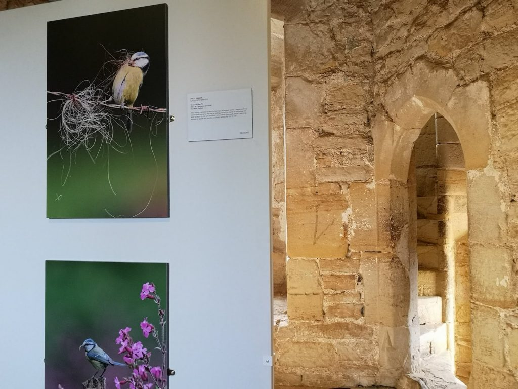 wildlife photos exhibited within the ancient walls of Bodiam Castle