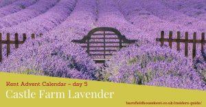 Field of lavender at Castle Farm