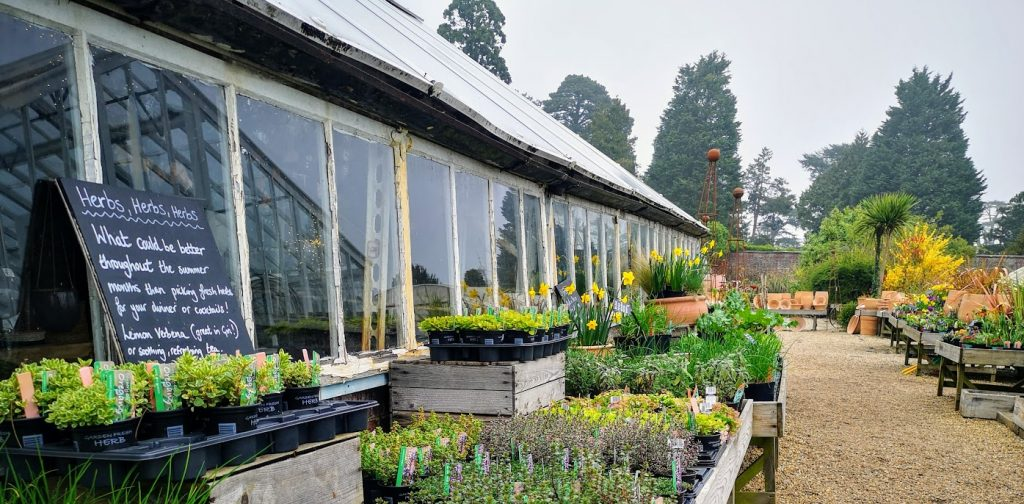 The Walled nursery glasshouse and bedding plants