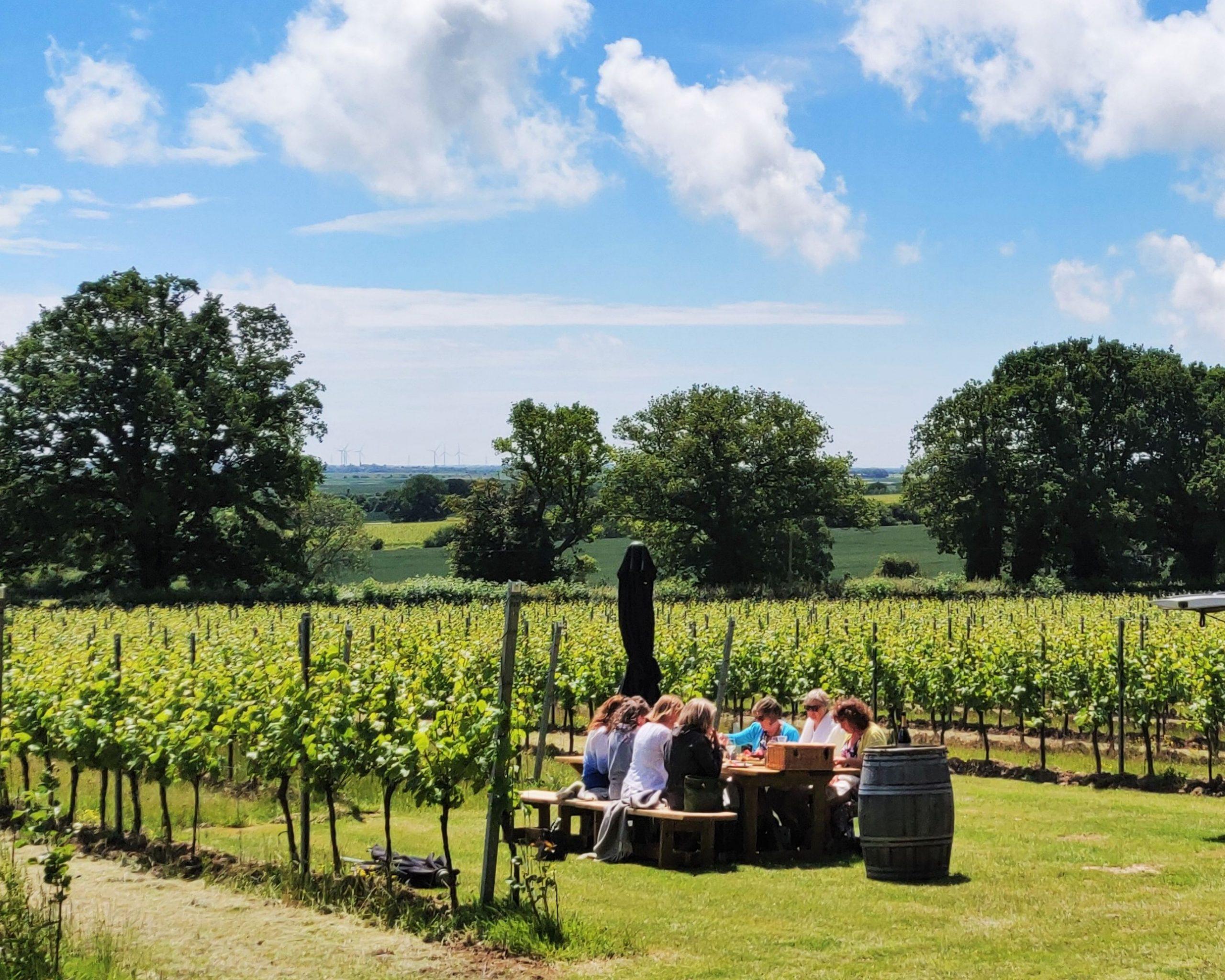 Lunch in a vineyard